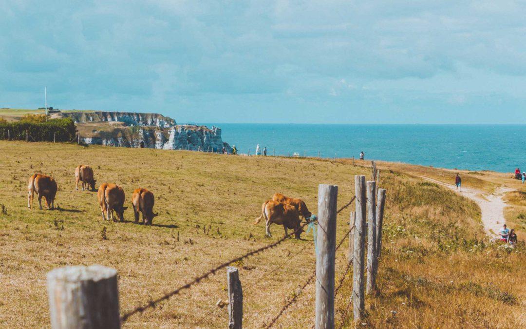 Comment attirer des touristes chinois en Normandie